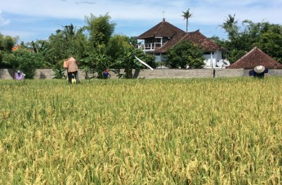 Land for lease in Kerobokan