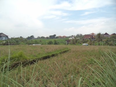 photo: 30-are land for lease in Berawa, Bali