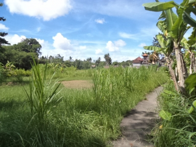 photo: 5-are land for lease in Kerobokan, Bali