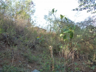 photo: 15-are land for lease in Labuan Bajo, Flores