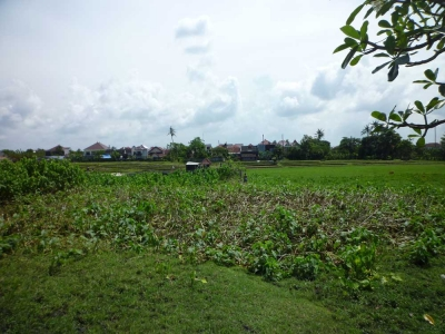 photo: 22-are land for lease in Seminyak, Bali