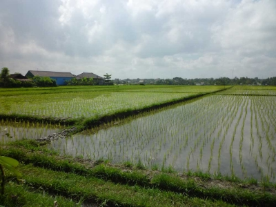 photo: 77-are land for lease in Umalas, Bali