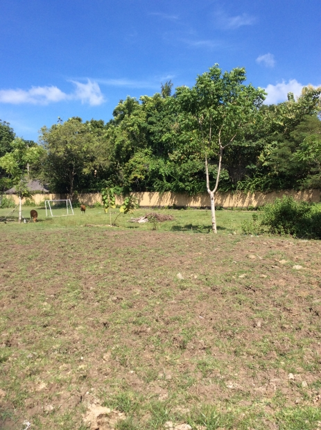 photo: 90-are land for lease in Umalas, Bali