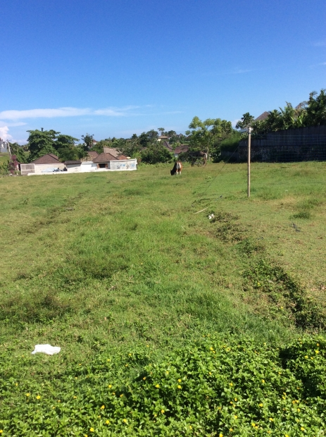 photo: 29-are land for lease in Umalas, Bali