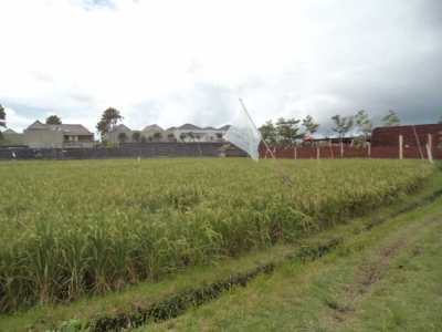 photo: 18-are freehold land for sale in Batubelig, Bali