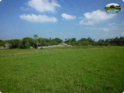 photo: 44-are freehold land for sale in Canggu, Bali