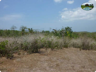 photo: 400-are freehold land for sale in Dreamland, Bali