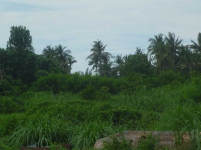 photo: 85-are freehold land for sale in Jimbaran, Bali