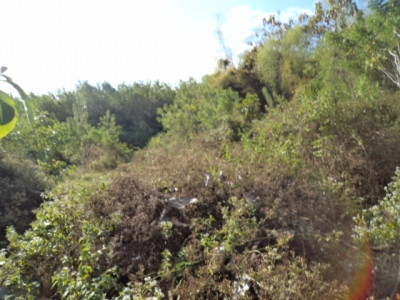 photo: 300-are freehold land for sale in Labuan Bajo, Flores