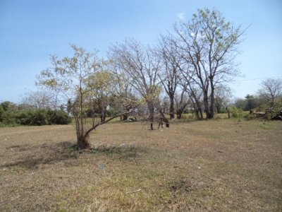 photo: 45-are freehold land for sale in Labuan Bajo, Flores