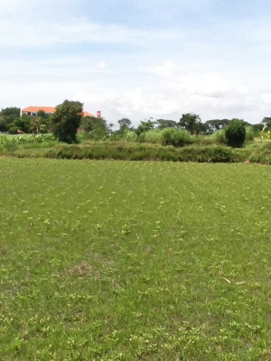 photo: 166-are freehold land for sale in Sanur, Bali