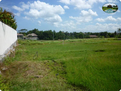photo: 16-are freehold land for sale in Umalas, Bali