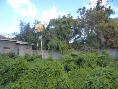 photo: 5-are land for lease in Batubelig, Bali