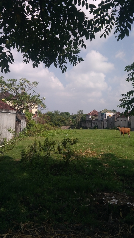 photo: 31-are land for lease in Canggu, Bali
