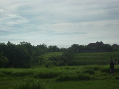 photo: 40-are land for lease in Canggu, Bali