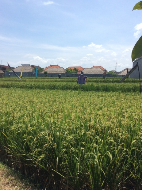photo: 53-are land for lease in Kerobokan, Bali