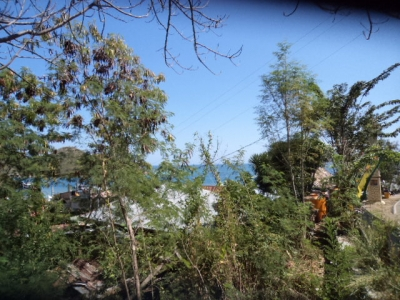 photo: 4-are land for lease in Labuan Bajo, Flores