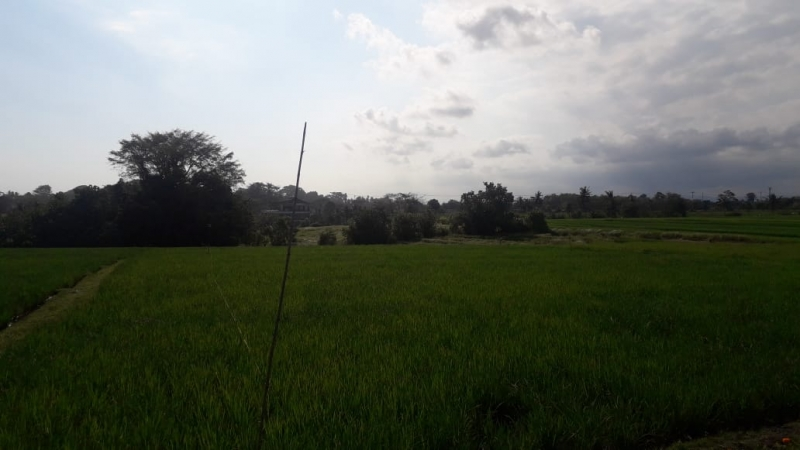 photo: 42-are land for lease in Pererenan, Bali