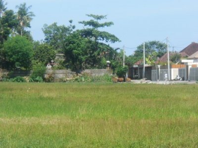 photo: 8-are land for lease in Seminyak, Bali