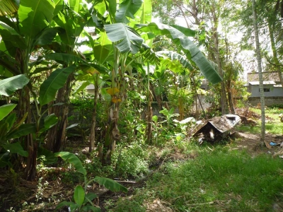photo: 5-are land for lease in Umalas, Bali