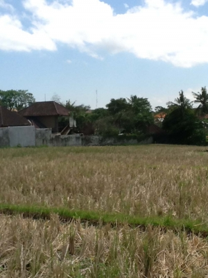 photo: 14-are land for lease in Umalas, Bali
