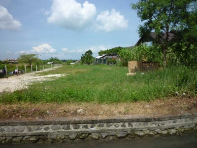 photo: 42-are freehold land for sale in Batubelig, Bali