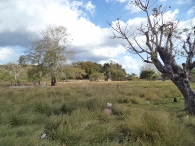 photo: 46-are freehold land for sale in Labuan Bajo, Flores