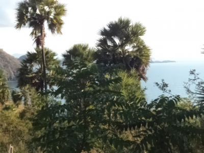photo: 170-are freehold land for sale in Labuan Bajo, Flores