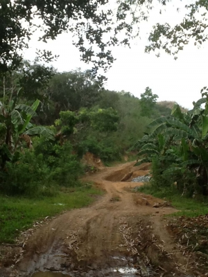 photo: 200-are freehold land for sale in Labuan Bajo, Flores