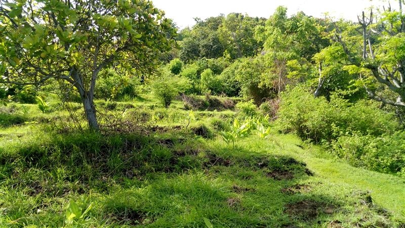photo: 106-are freehold land for sale in Lovina, Bali