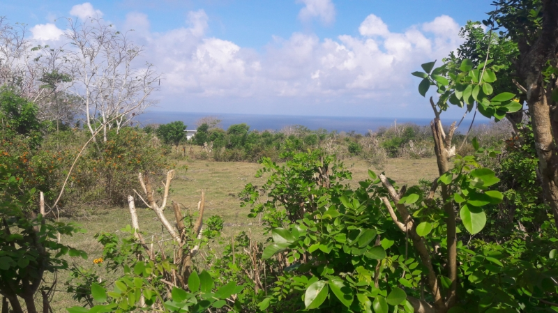 photo: 200-are freehold land for sale in Pandawa, Bali