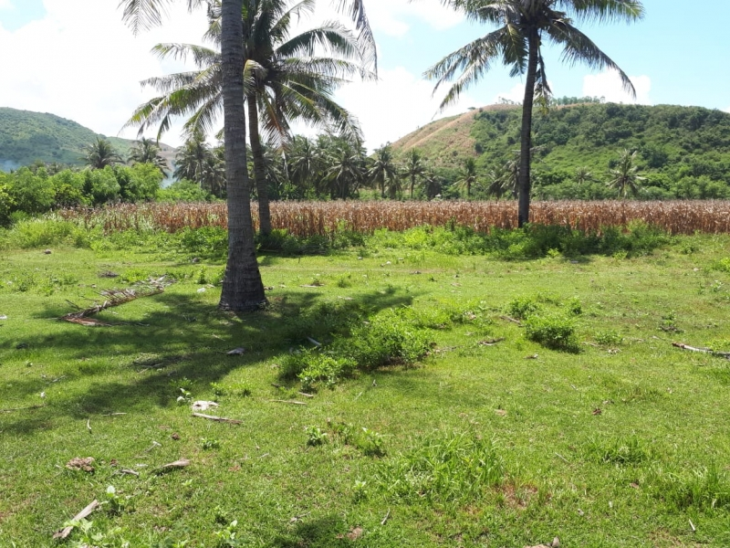 photo: 244-are freehold land for sale in Pantai Meang, Lombok