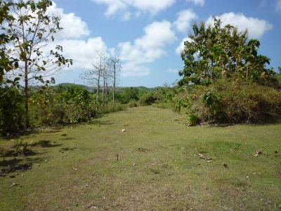 photo: 100-are freehold land for sale in Uluwatu, Bali
