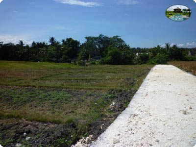 photo: 25-are freehold land for sale in Umalas, Bali