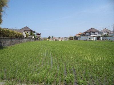 photo: 80-are freehold land for sale in Umalas, Bali