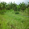 land for lease Petitenget Bali