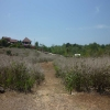 freehold land for sale Dreamland Bali